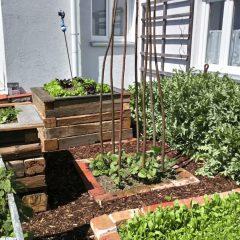 Kräuter- und Gemüsegarten